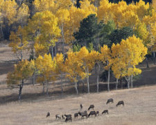 bettyhollig Betty-Holling-elk-meadow-2AL1220