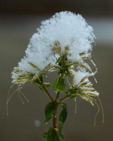 Csilla-Florida-snowonflowers-1B0320