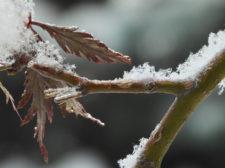 Csilla-Florida-snowybranch-1B1119