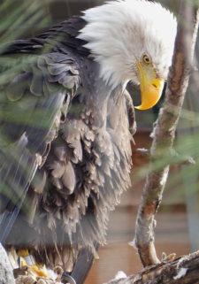 donnapiller-Eagle-L1runup0419