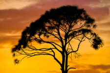 Kathy-Snead Everglades-Sunset-winner08118