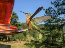 lwinters-Loren-hummingbird-2A0919