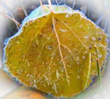 Zimmerman-Ann Crystal Leaf-2B1119