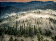foglandscape-nelson