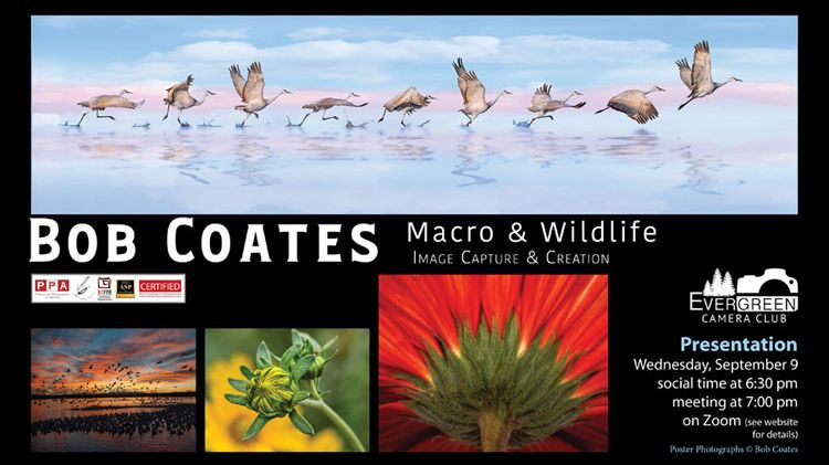 Macro & Wildlife Imaging & Creation